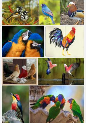 Как правильно сочетать цвета в одежде птицы