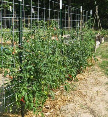 опора для помидоров